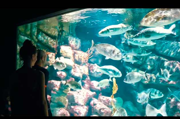 El-Aquarium-Mare-Nostrum