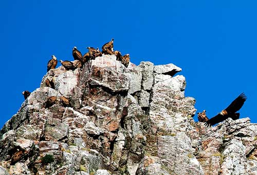 parque-nacional-de-monfrague